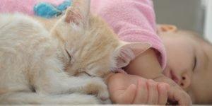 parul animalelor si sanatatea copiilor