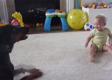 catelul-poate-fi-o-bona-amuzanta-pentru-bebe-video.jpg