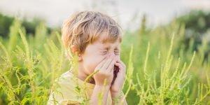 alergia la ambrozia