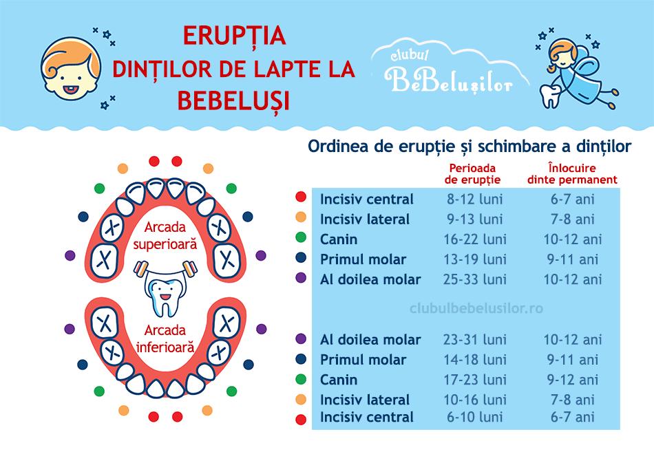 eruptie-dinti-lapte-bebelusi-infografic